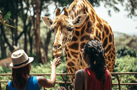 5 Days / 4 Nights  South Africa Holidays Package